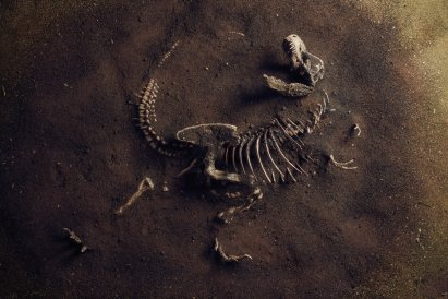 /tech/takie-decyzje-moga-zapasc-tylko-w-dobie-koronawirusa-chca-wyhodowac-dinozaury,25238,1,a.html