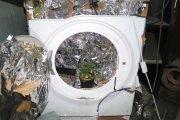 Domowe ogrodnictwo. Uprawiał marihuanę w pralce